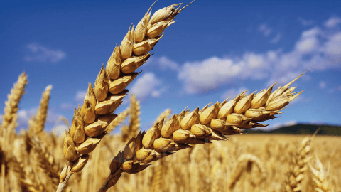 Agrarwissenschaften